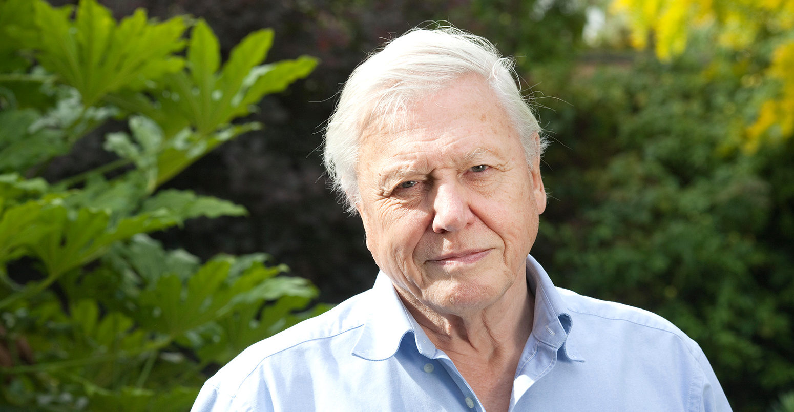 Sir David Attenborough, English broadcaster and naturalist, at his home in Richmond, Borough of Richmond upon Thames, England UK