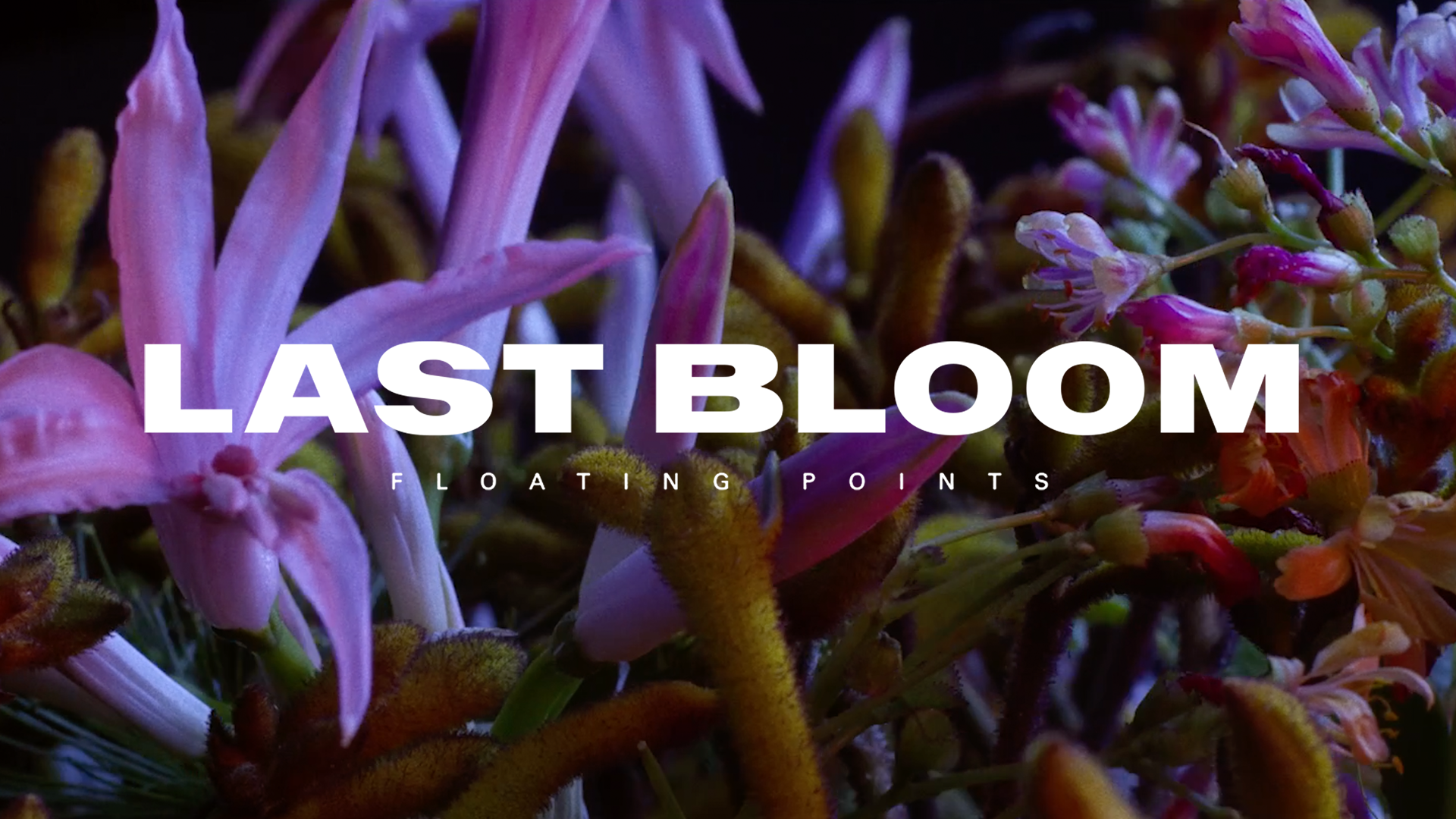 Last bloom and logo